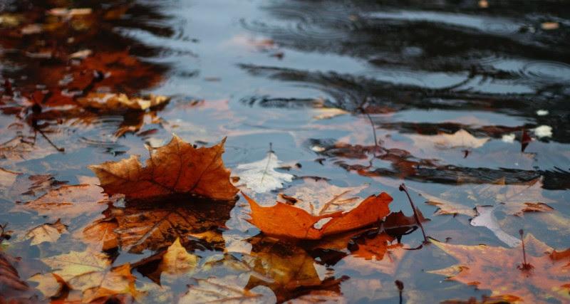 Thanksgiving for rain – 17 or 24 June