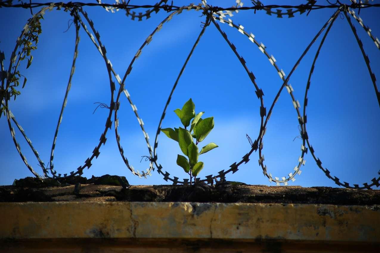 El Salvador's miracle prison