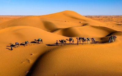 Arab Bedouin tribes