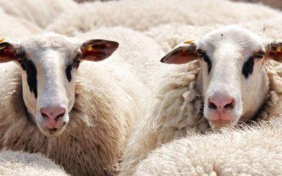 Eid al-Adha – the festival of sacrifice