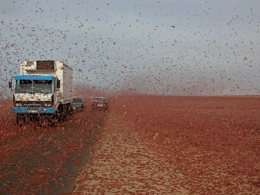 Locust swarms in Africa and the Middle East